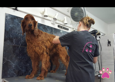 groomingcourses-4